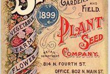 Garden Love! / Green love!  Gardening, sustainability, homegrown goodness www.irishtwinssoaps.com