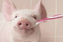 Pigs  / by Pamela Tuveson