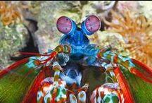 Sea Life / // creatures of the sea //