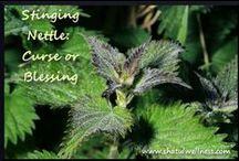 Herbs of the bible / Edible and Medicinal Plants From the Bible