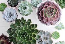 Plantes et jardin / Belles compositions, plantes belles et originales, idées pour la maison ou sources d'inspiration