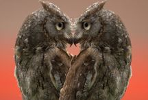 Owls, real & imagined / by Elaine Humphrey