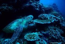 My Sea Turtle Photos  / All the photos on this board are my own work.  You are welcome to repin. / by Bobbie