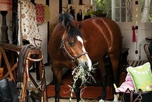 Everything Equestrian / Dream properties, trailers, tack and equestrian apparel. Everything a horse addicted woman like myself could lust after or smile at. / by Julie Babcock