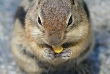 Squirrels & Chipmunks / by Bobbie