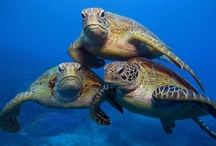Sea Turtles / by Bobbie