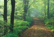 A Walk in da Woods