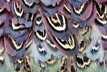: Feathers :