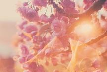 Romance / by Holly Arwen