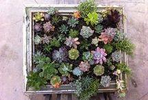 Garden Spaces / by Zoe Organics