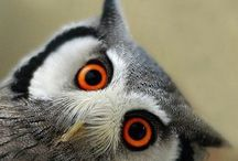 The Owls Have It! / by Gara Lawson