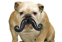 Mustache Products and Gifts
