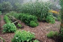 Gardening Tips / Gardening tips and ideas