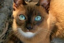 Pets / by Natoya Ridgeway