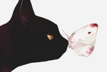 The black cat theory / by Clotilde Mathieu