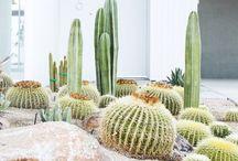 Plant attraction
