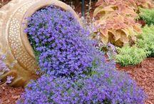 Rock Garden / #rock #garden #succulents #alpines