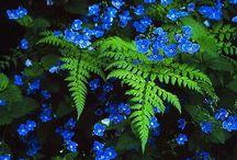 Shade Garden / #shade #plants #garden #design