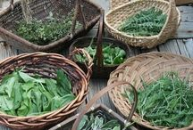 The Frugal Forager / #Foraging #Wild #food #free