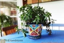 Pflanzenübertöpfe aus Mexiko / Originelle Planzenübertöpfe aus mexikanischer Keramik von Mexambiente