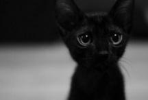 Viiru`s cat`s