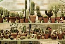 Cactus Cooler / ...and succulents too! / by megan green gomez