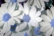 Heavenly Blue and White / Need I say more? / by Maria Rodriguez Stidham