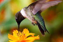 Tweet Tweet / God's feathery creatures  / by Maria Rodriguez Stidham
