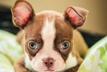 how cute are YOU? / Big or small with a personality.  / by Maria Rodriguez Stidham