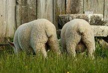 Sheep / by Amazing Beads