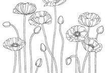 Pleasant Poppies / by Julie Engel