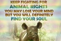 Animal rights / by Trisha 'Jones' Desmarais