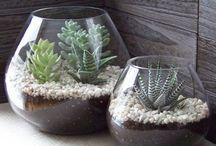 Plants : Home
