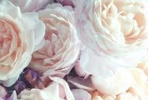❀ ❁ F L E U R ❁ ❀ / Everything floral