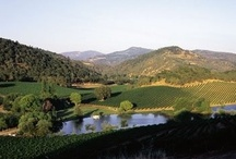 Napa Valley In March / by I am UNABASHED