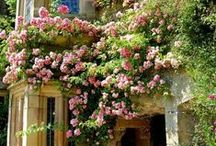 |Gardening|
