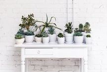 Plants / Bring the outdoors in with plants, decorating with plants