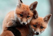 animals: foxes / by Kat Alford