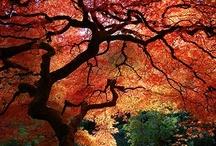 Fall is Fabulous  / All Things Fall