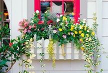 Container Gardens / Not ready for a full-blown garden? Peruse these fun mini-gardening ideas. Follow this board for more container garden ideas! Or see container garden ideas on our website: http://www.midwestliving.com/garden/container/ / by Midwest Living