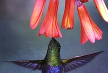 Feathered / by Judy Carpenter