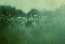 wanderlust / by Rachelle Vaughan