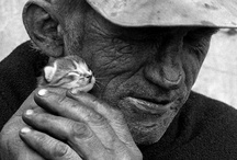 for the love of animals / by L DeDo
