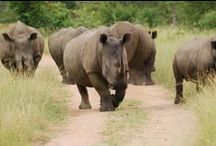 TOUR: SUDÁFRICA IMPRESCINDIBLE CON RUTA JARDIN / Con nuestros tours por Sudáfrica podrás conocer a los 5 grandes (leones, leopardos,elefantes,búfalos y rinocerontes) durante tu día de Safari en Parque Nacional Kruger.Conoce Pretoria, Johannesburgo, Ciudad del Cabo, visita la granja de Avestruces y las Cuevas del Cango. Haz tu extensión para conocer las Cataratas Victoria, Livingstone, Chobe... Descubre lo que te espera aquí.