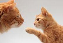 New Kitten Tips / Meow.