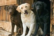 Dogs / by Sherry Koenig