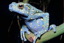 FROG & TOAD / In all forms, frogs fascinate me.  Plunk your magic twanger, Froggy! / by Judy Carrino