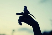 For the love of birds <3