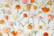 Floral / Beautiful flowers.