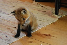 I must have a pet fox.  / by Emily Shinnebarger